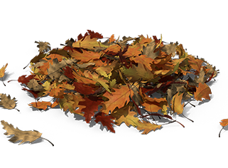 compost leaves.png